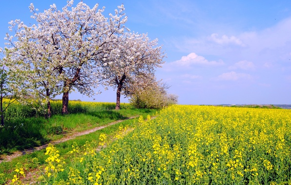 Picture field, the sky, trees, nature, color, spring, Germany, May, rape, By Hans Vaupel