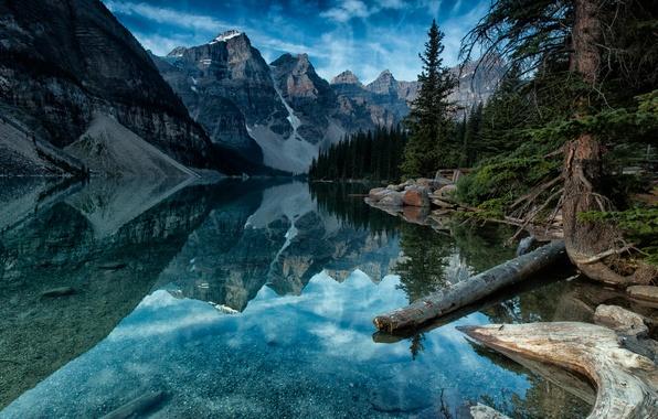 Picture forest, mountain, canada, alberta, banff, moraine lake