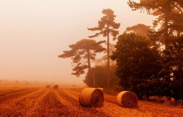 Picture wheat, field, the sky, landscape, nature, fog, view, bales, straw, sky, field, landscape, nature, view, …