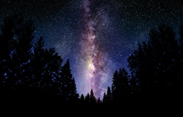 Picture forest, the sky, space, night, landscapes, stars, the milky way
