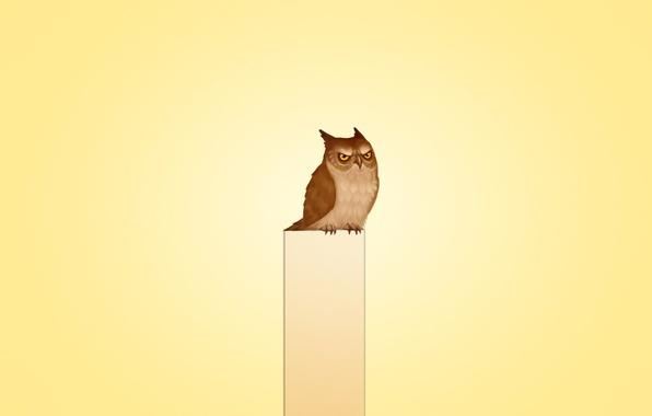 Picture animal, owl, bird, minimalism, sitting, owl, gloomy, owl