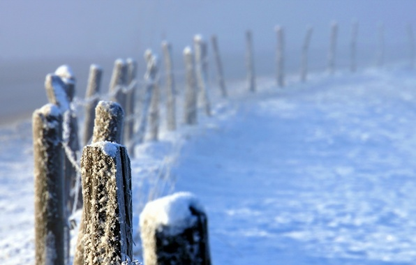 Picture winter, fog, the fence