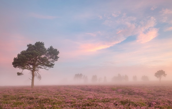 Picture field, summer, fog, morning