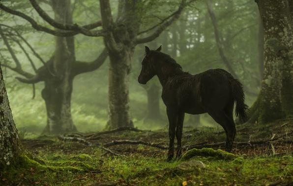 Picture forest, trees, konyashka, horse