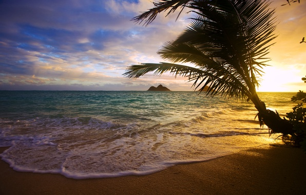 Picture sea, sunset, tropics, Palma, coast