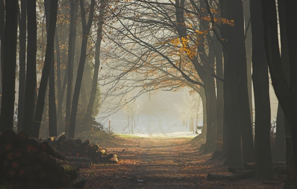 Picture forest, leaves, trees, fog, trail, logs