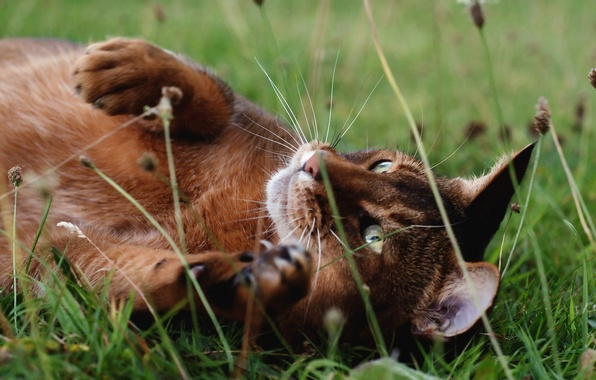 Picture grass, cat, nature, Kote, lying
