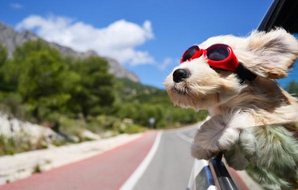 Picture road, machine, the wind, dog, glasses, dark