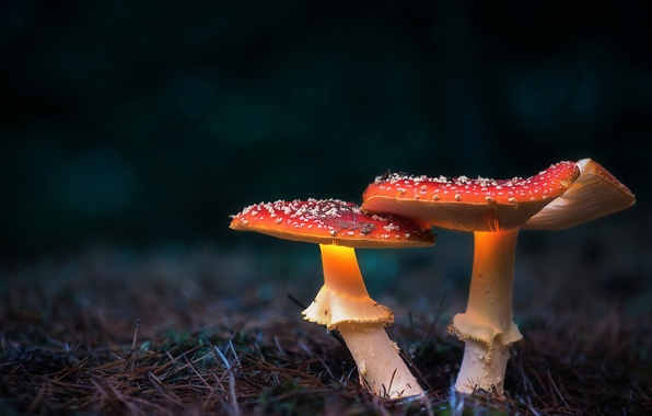 Picture autumn, nature, mushrooms
