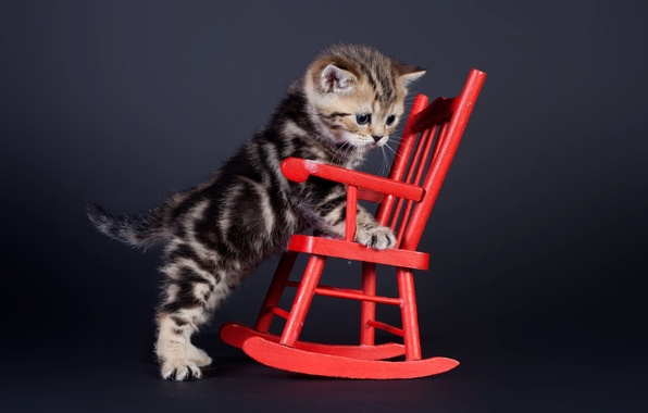 Picture background, chair, kitty, chair