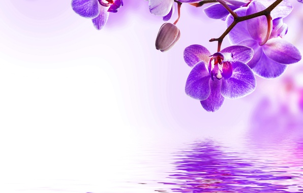 Picture water, flowers, flowering, Orchid, water, flowers, beautiful, orchid, purple, reflection