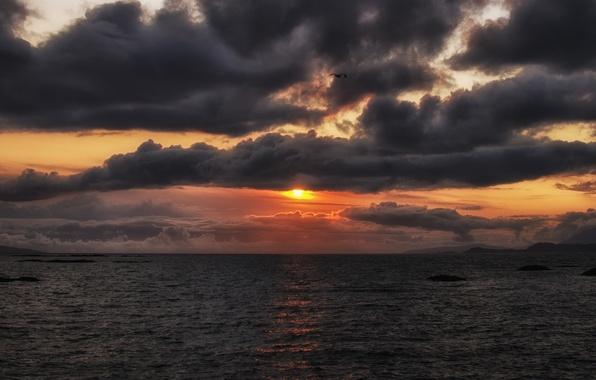 Picture sea, the sky, the sun, flight, sunset, orange, clouds, the ocean, bird, The evening, Bay