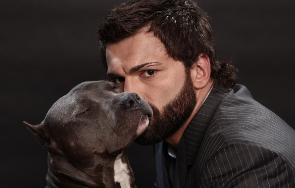 Picture dog, male, fighter, fighter, pit bull, mma, mixed martial arts, mixed martial arts, Andrei Arlovski, …