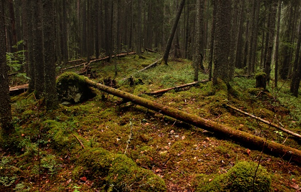 Picture forest, leaves, trees, moss, logs
