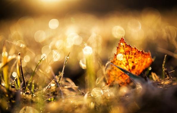 Picture grass, sheet, glare, autumn