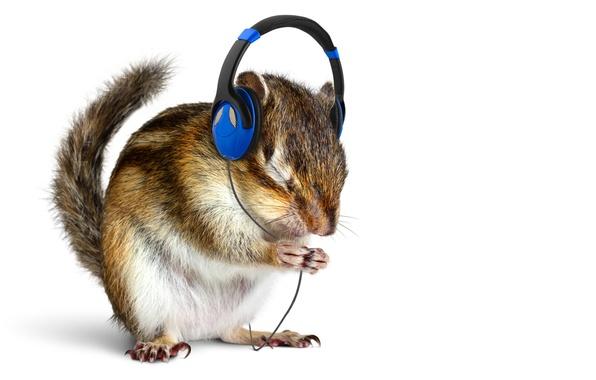 Picture music, animal, headphones, white background, animal