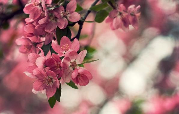 Picture leaves, macro, flowers, nature, plant, petals, bokeh