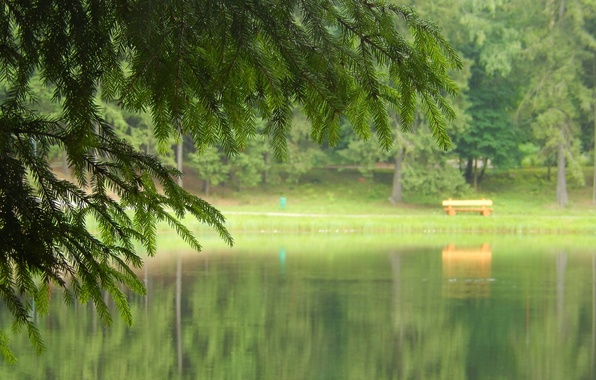 Picture bench, nature, lake, widescreen, Wallpaper, spruce, wallpaper, widescreen, background, the Wallpapers, full screen, HD wallpapers, …