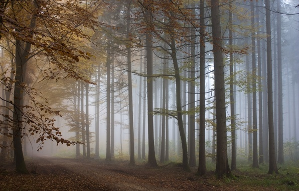 Picture autumn, forest, trees, fog, track