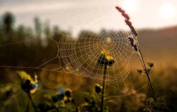Picture field, grass, the sun, macro, light, web, morning