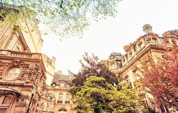 Picture trees, nature, the city, France, Paris, building, home, spring, Paris, architecture, flowering, France