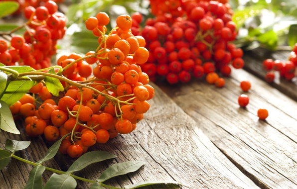 Picture autumn, berries, table, blur, red, orange, Rowan, bokeh, wallpaper., rowan berry