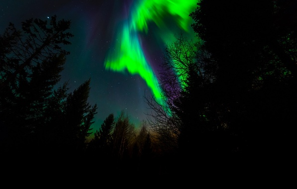 Picture stars, trees, night, Northern lights, silhouette, Norway