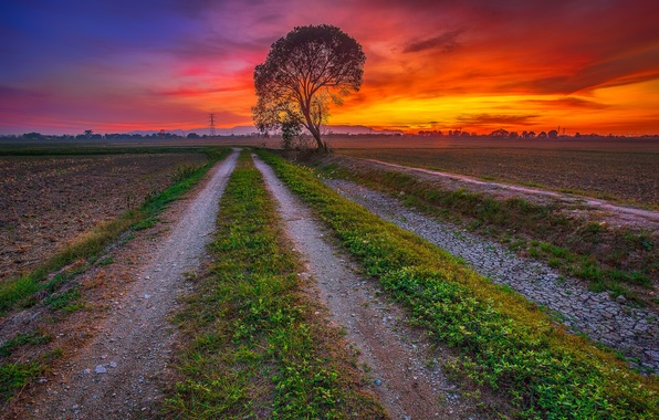 Picture road, field, the sky, clouds, sunset, tree, glow