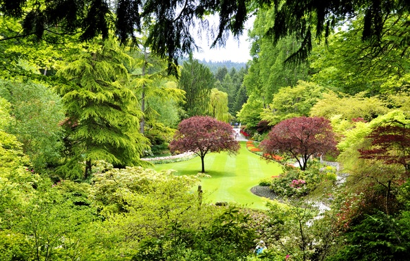Picture grass, trees, Park, lawn, garden, Canada, the bushes, Butchart Gardens