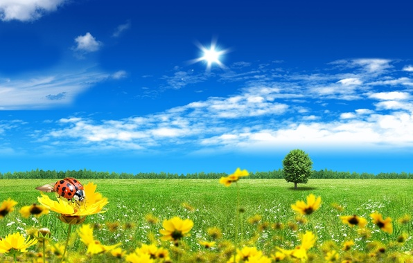 Picture the sky, grass, clouds, ladybug, Nature, beauty, ray, blue