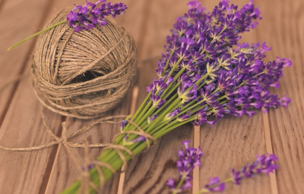 Picture purple, flowers, tangle, background, widescreen, Wallpaper, mood, wallpaper, flowers, thread, flower, widescreen, background, lavender, full …