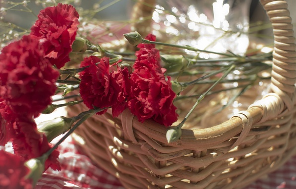 Picture flowers, petals, red, clove, basket. basket