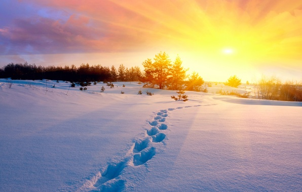 Picture cold, winter, field, the sky, the sun, snow, trees, sunset, traces, nature