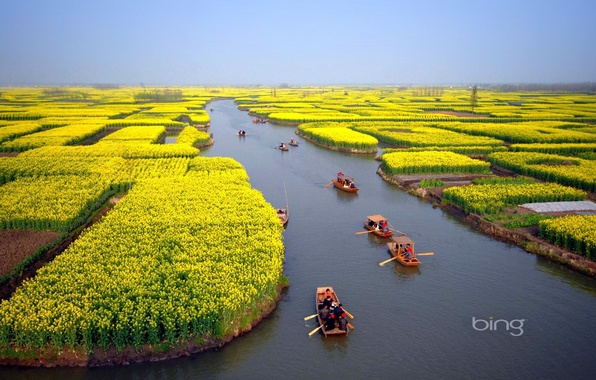 Picture field, flowers, people, boats, horizon, channel