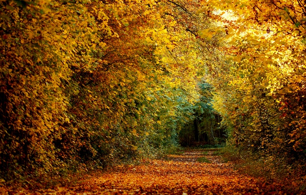 Picture forest, nature, autumn, leaves, path