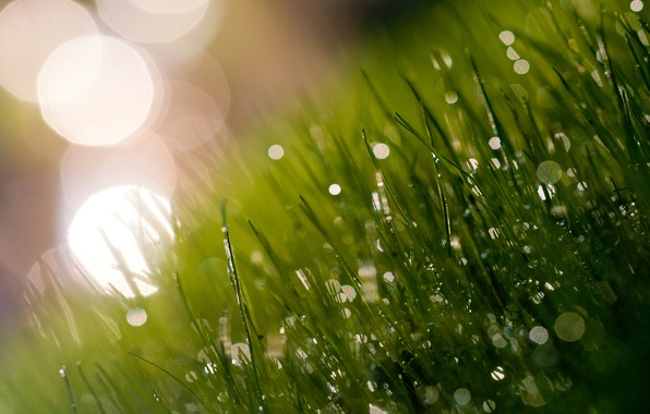 Picture greens, grass, light, freshness, Rosa, glare, morning, meadow, grass, juicy, shadow.