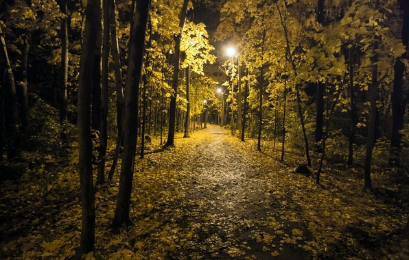 Picture autumn, night, the city, Park