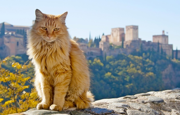 Picture cat, red, Spain, Spain, Andalusia, Andalusia, Granada, Granada