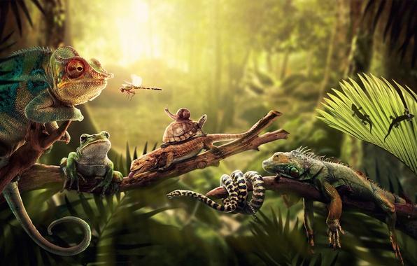 Picture light, frog, turtle, snake, snail, dragonfly, jungle, fern, iguana, lizards