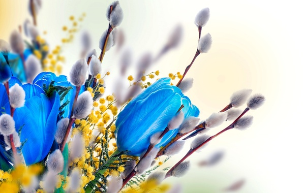 Picture rendering, Tulip, bouquet, spring, Verba, Mimosa