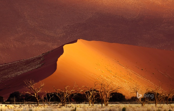 Picture sand, trees, desert, dunes, Africa, Namibia, Sossusvlei