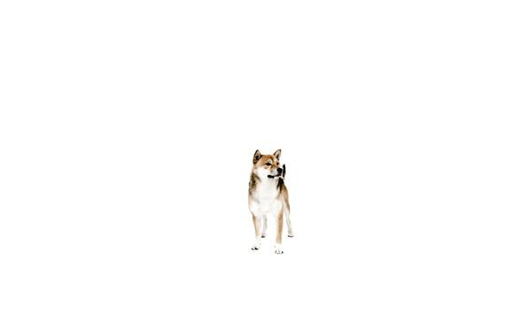 Picture each, dog, minimalism, dog