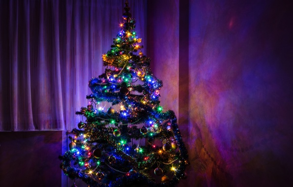Picture tree, spruce, Christmas, New year, Christmas, Tree, New, Christmas tree, Happy, Year, 2015, Merry, Herringbone