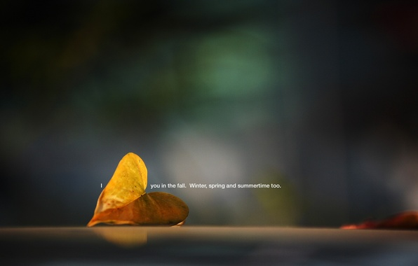 Picture macro, sheet, photo, background, the inscription, Wallpaper, plant, picture, fallen, i you in the fall. …