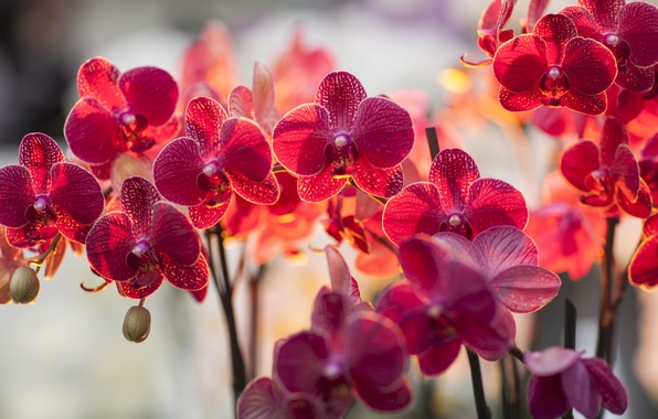 Picture light, flowers, branch, lighting, Orchid, falinopsis, Falik