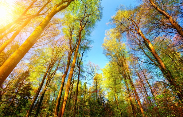 Picture autumn, forest, the sun, trees, branches, the top