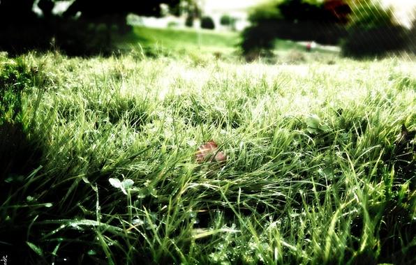 Photo wallpaper Rosa, freshness, grass, greens, nature