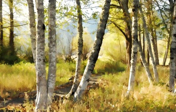 Picture nature, background, birch