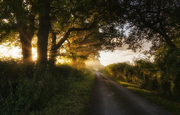 Picture road, summer, grass, the sun, rays, light, trees, nature, the bushes