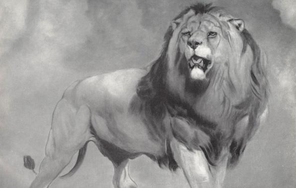 Picture cat, predator, Leo, mane, William Huggins